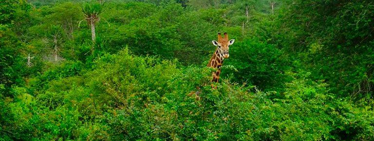 How to do a safari in Kissama Angola