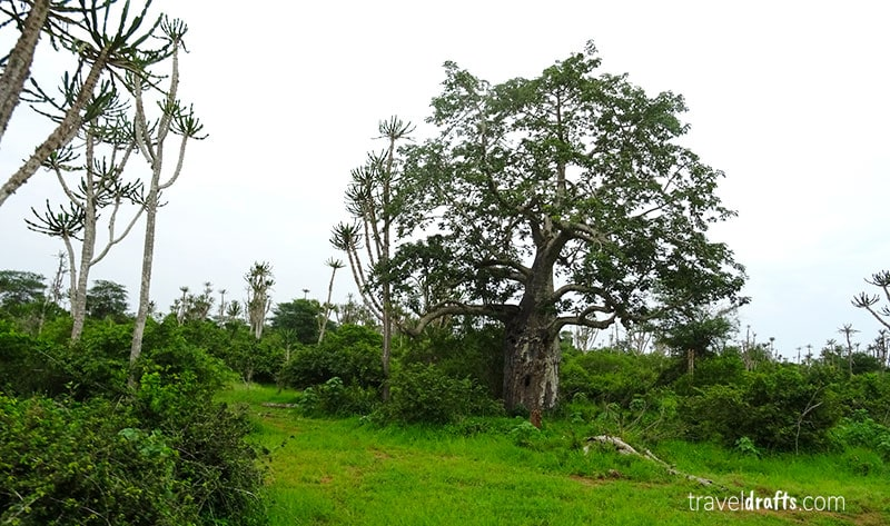 TheAnimals and Plants in Kissama National Park