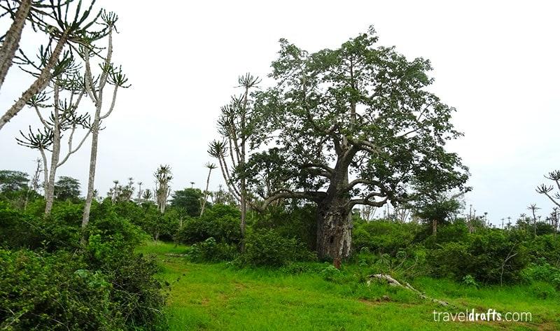 Lindíssima paisagem do Parque nacional da Kissama