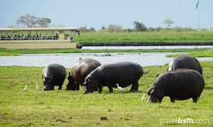 River Safari in the Chobe National Park