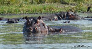 Water Safari in a mokoro