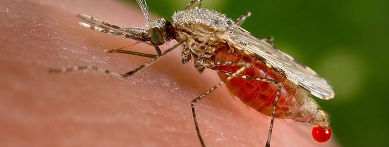 All you need to know about Malaria