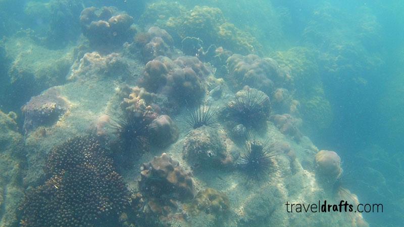 Snorkeling in KohTres Cambodia