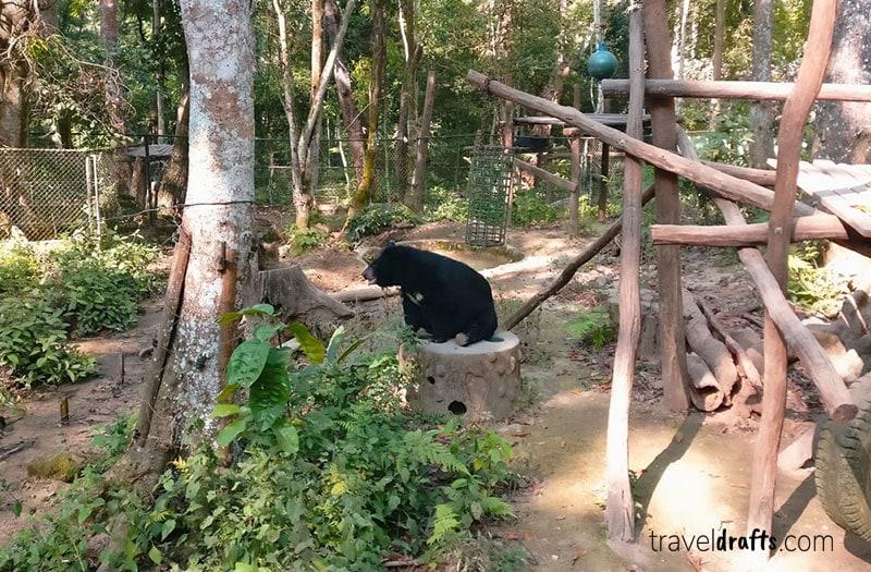 Visit Bear Park Laos