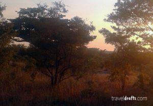 Best Safari in Kruger National Park