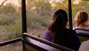 how to do a Kruger National Park Safari