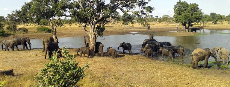 How to go to Kruger National Park