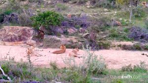 Kruger National Park Safari and Game drives
