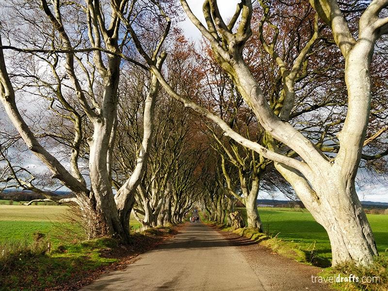 The Dark hedges road in Northern Ireland