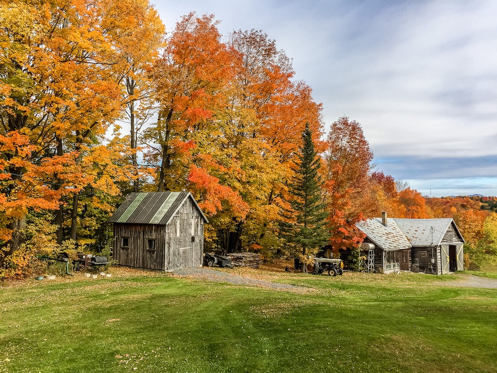 Trees with fall colors in Quebec - What is Canada famous for?