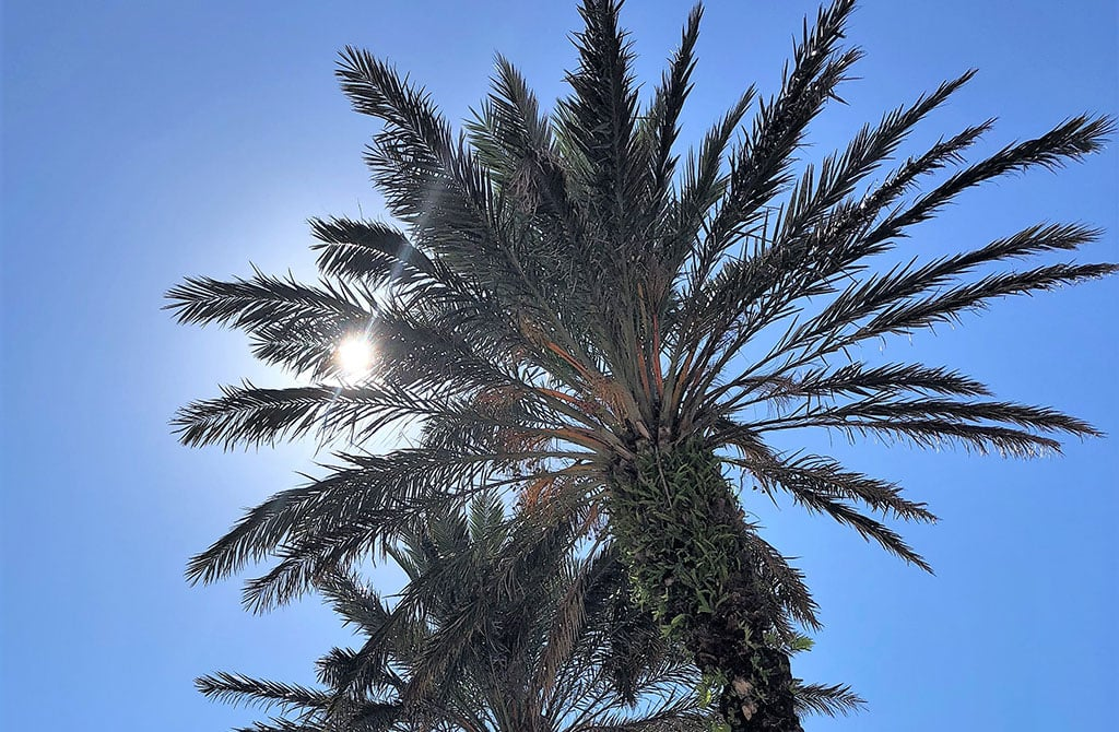 Things Florida is famous for - Palm trees