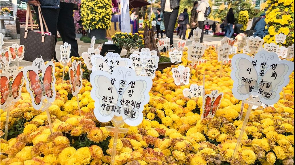 How to visit Soeul in Winter