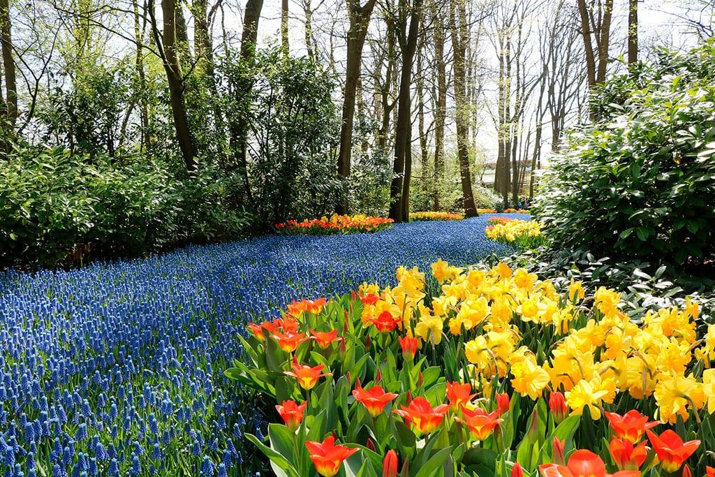 famous gardens of Keukenhof, one of the popular Netherlands Landmarks