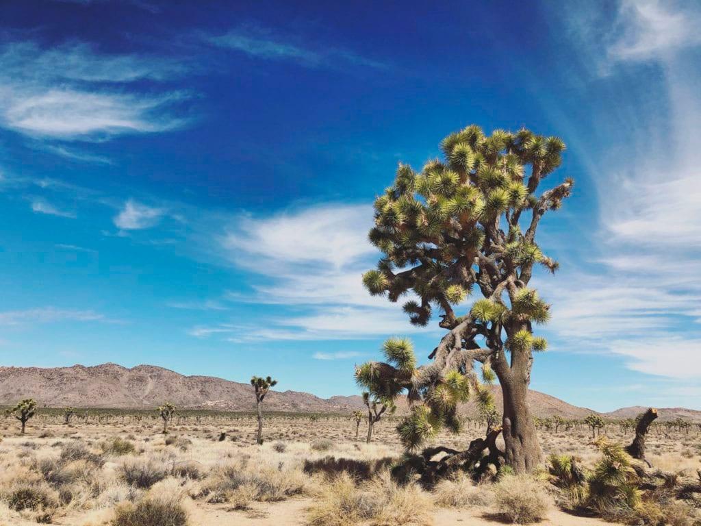 Landmarks in California