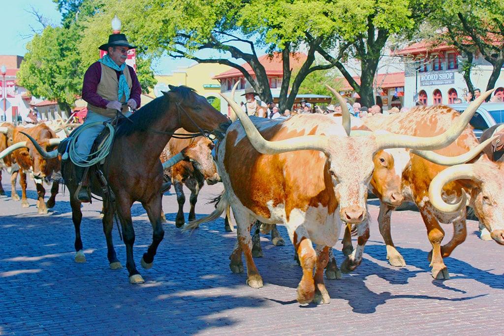 Fort Worth Herd