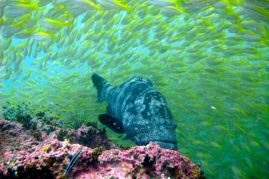 Fish Sail Rock (Hin Bai)