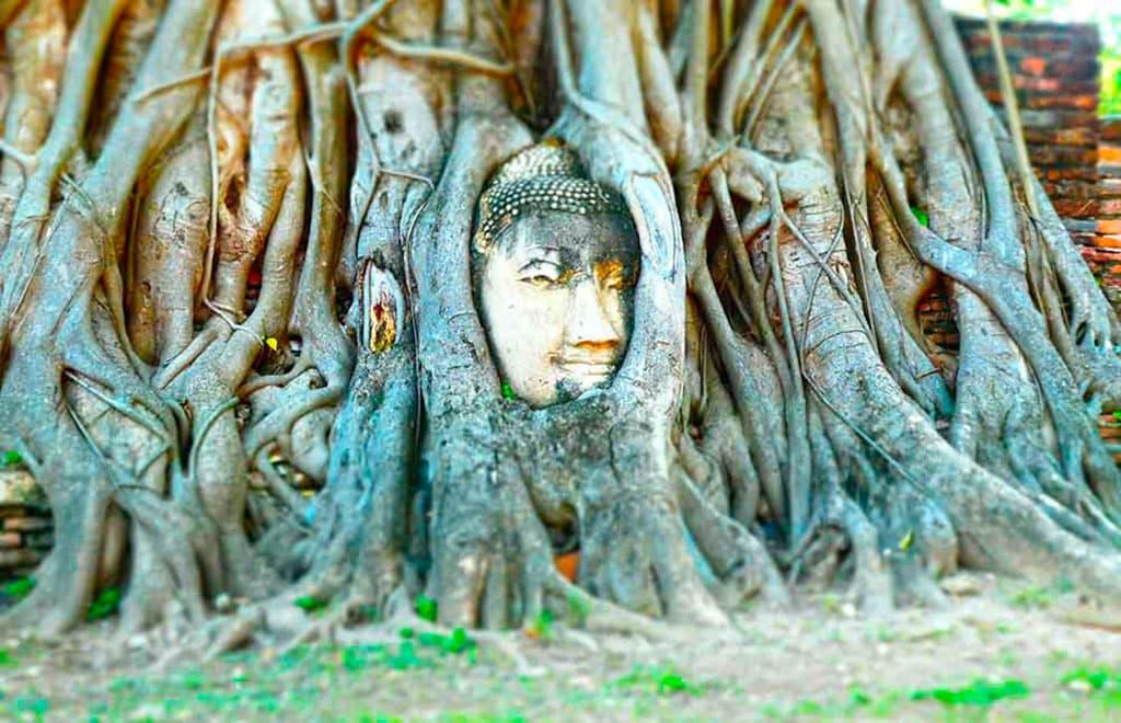 Head in Tree Thailand landmarks 26 Famous landmarks in Thailand